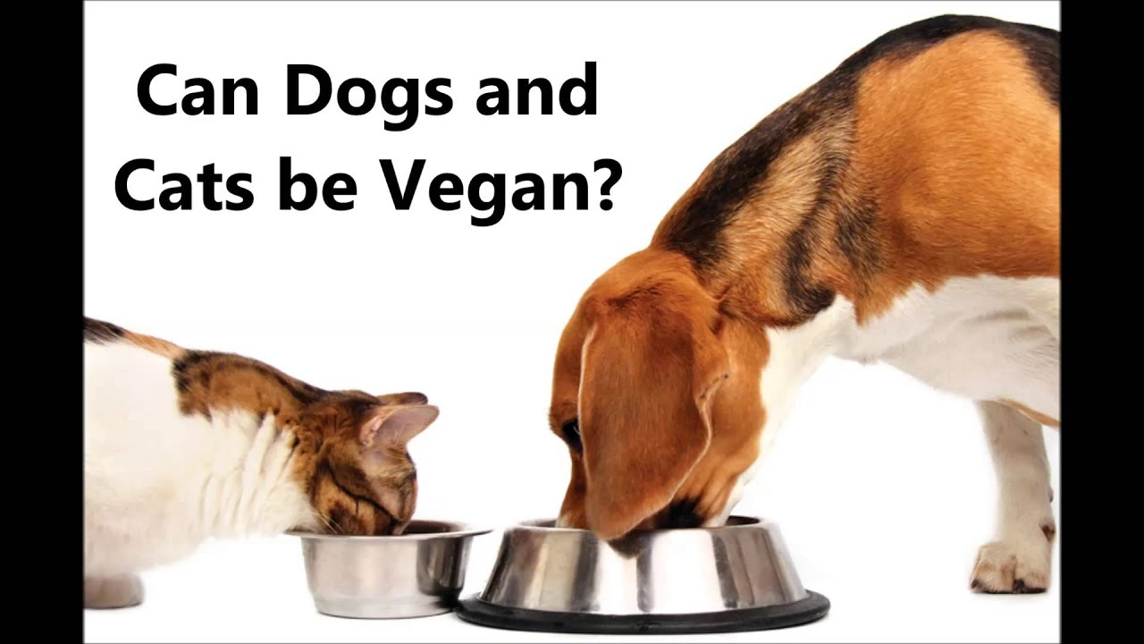 can dogs and cats thrive on a vegan diet   youtube