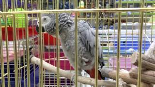 Зоомагазин купить цена попугай амадина кенар канарейка корелла кролик свинка хомяк Украина