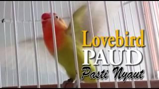 Video Lovebird Paud Pasti Nyaut download MP3, 3GP, MP4, WEBM, AVI, FLV November 2018