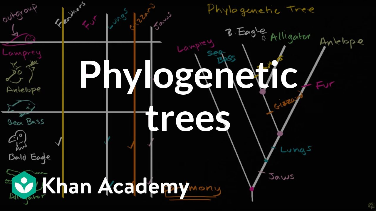 Phylogenetic trees evolution khan academy youtube phylogenetic ccuart