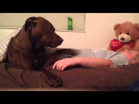 Service Dog alerting & responding to Syncope (pass out spell)