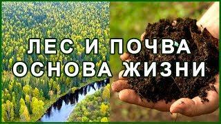 Лес и Почва. Голод. Засуха 1891, 1921, 1946 г. Экология. Заповедник.