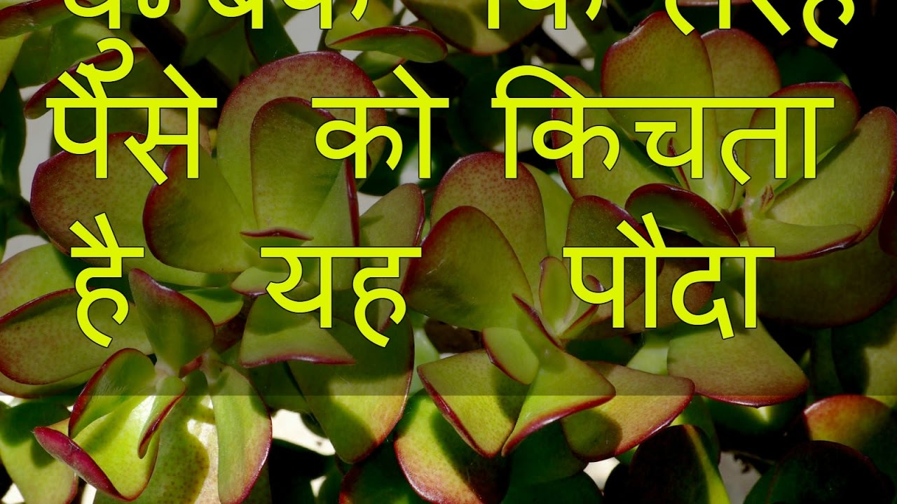 Feng Shui Tips For Money In Hindi