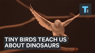 These tiny parrots could give us clues about how dinosaurs learned to fly