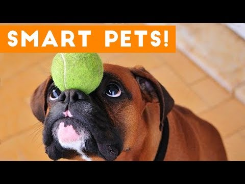 Funniest Smart Pets and Animal Tricks of 2017 Compilation | Funny Pet Videos