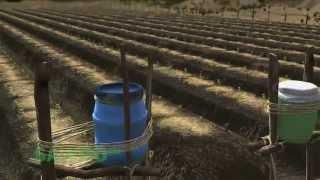 Agricultura de supervivencia: Riego por goteo en Español (acento de España)