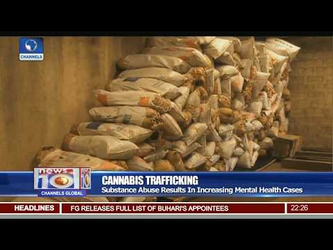 Cannabis Trafficking: NDLEA Seizes Over 2 Tonnes In Niger State