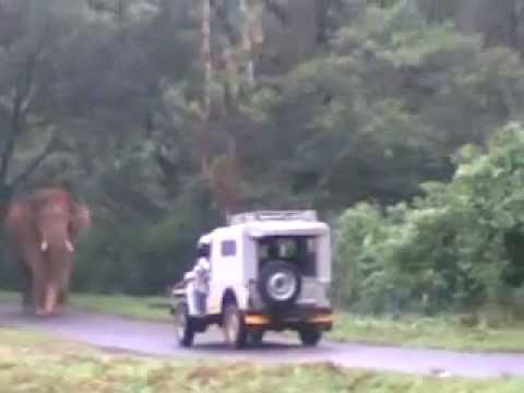 Elephant attacks Jeep in Kerala - YouTube