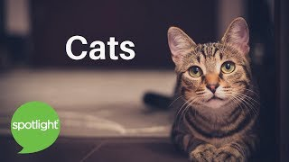 "Baixar ""Cats"" - practice English with Spotlight"