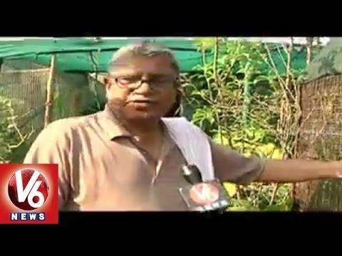 V6 Ground Report - Terrace farming by Ramaraju - Hyderabad (23-05-2015)