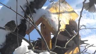 Кормушка для птиц зимой