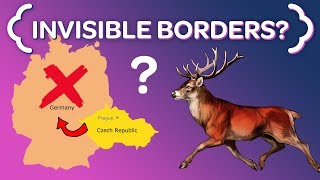 Why These Czech Deer NEVER Cross the German Border