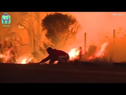 Man rescues rabbit amidst intensifying flames from LA wildfire