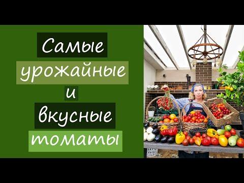 Самые урожайные и вкусные томаты