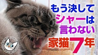 保護 #猫 #里親 #かわいい #なついた #なれた #よぶ #なき #こえ #お迎...