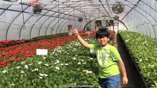 Let's Visit Local Nursery: Glendale Farms in Milford Connecticut (Part 1) - Gardening With Aiman