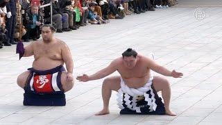 Борцы сумо исполнили ритуальный танец в Новом году (новости)