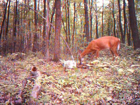 bear and deer vids mia lane 7 24 10 012