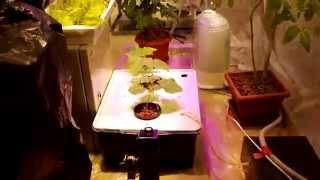 видео металлогалогенные лампы