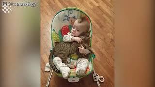 Спящие коты и катята