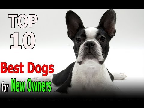 Top 10 Best dog breeds for New Owners | Top 10 animals