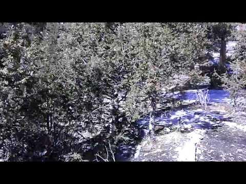 Hidden Forest Cabin - Nevada desert