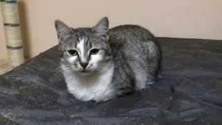 Москва. Очаровательная кошка Мария ищет дом и заботливую семью!