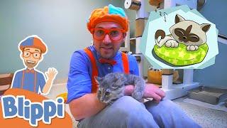 Learning Animals With Blippi + More Blippi Videos For Kids | Educational Videos For Kids
