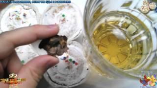 Распаковка и Обзор Еды Пасхальные Кексики [6 штук] и Шашлык с Пивом [0.5 л.]