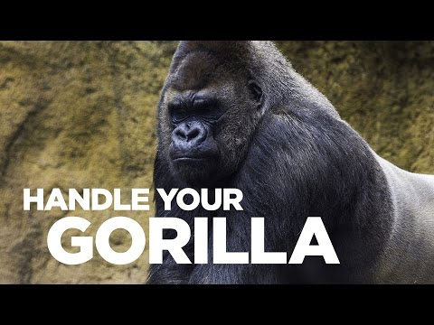 Handle Your Gorilla - Live @ 12pm EST Young Hustlers