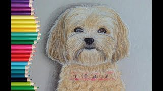 Speed Drawing/ How to draw a DOG | Lily Fee