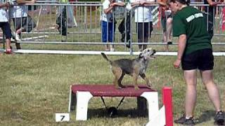 Socrate Border Terrier Manche 1 Agility Cat A