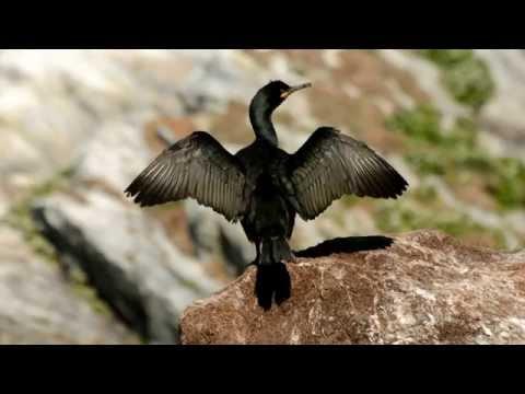 Varanger - birds and sites