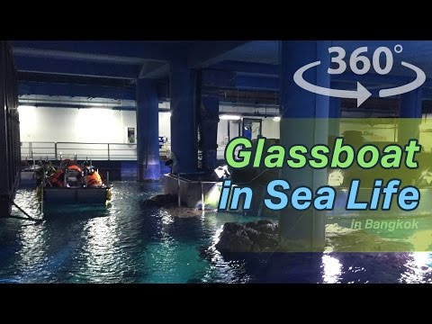 Glass boat in Sea life Ocean World in Bangkok in Thailand VR | 360 video