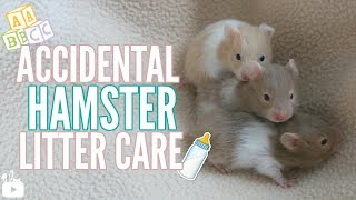 Accidental Hamster Litter care! (Baby hamsters!)