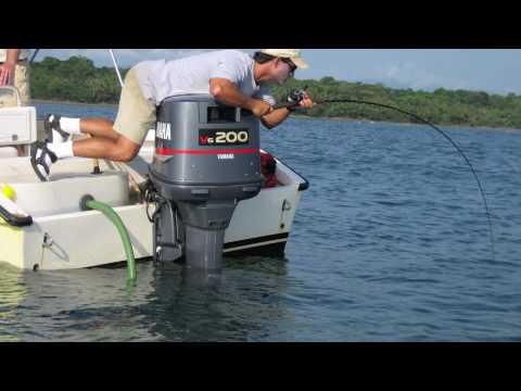 Panama Fishing