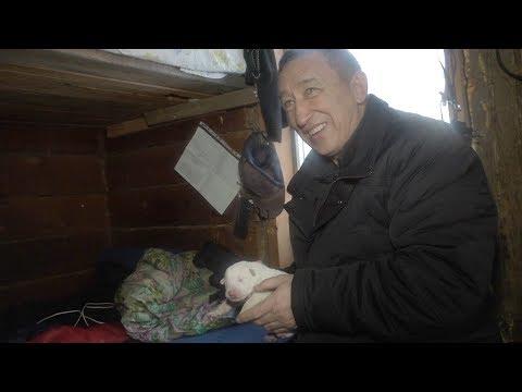 Якутская охотничья лайка. Интервью Юрия Борисова