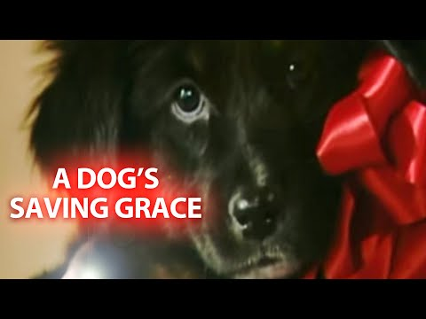 A Dog's Saving Grace - It's a Miracle - 6033