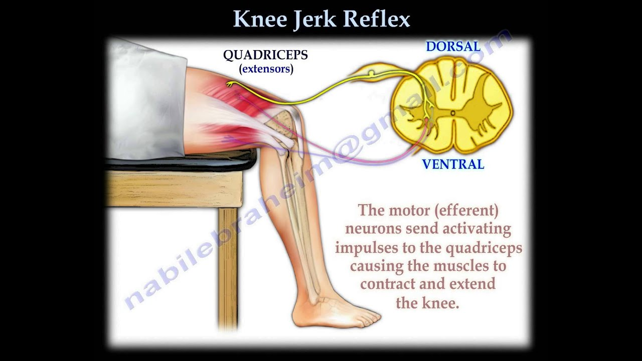 Knee Jerk Reflex Everything You Need To Know Dr Nabil Ebraheim