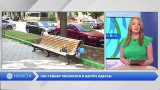 КОТ-ГЕЙМЕР ПОСЕЛИЛСЯ В ЦЕНТРЕ ОДЕССЫ