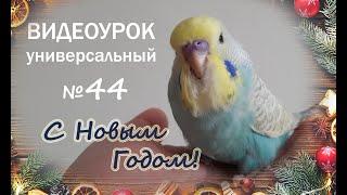 """🎧 Учим попугая говорить. Урок № 44: """"С Новым Годом!"""""""