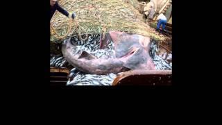 Balık ağına öyle bir şey takıldı ki!