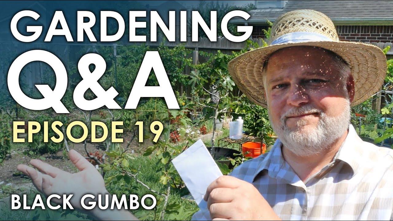 Gardening Q&A Episode 19 || Black Gumbo