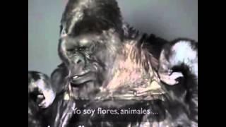"""Mensaje de Koko el gorila """"Proteged a la Tierra"""""""