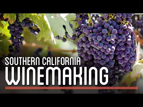 Winemaking in Southern California | How to Brew Everything