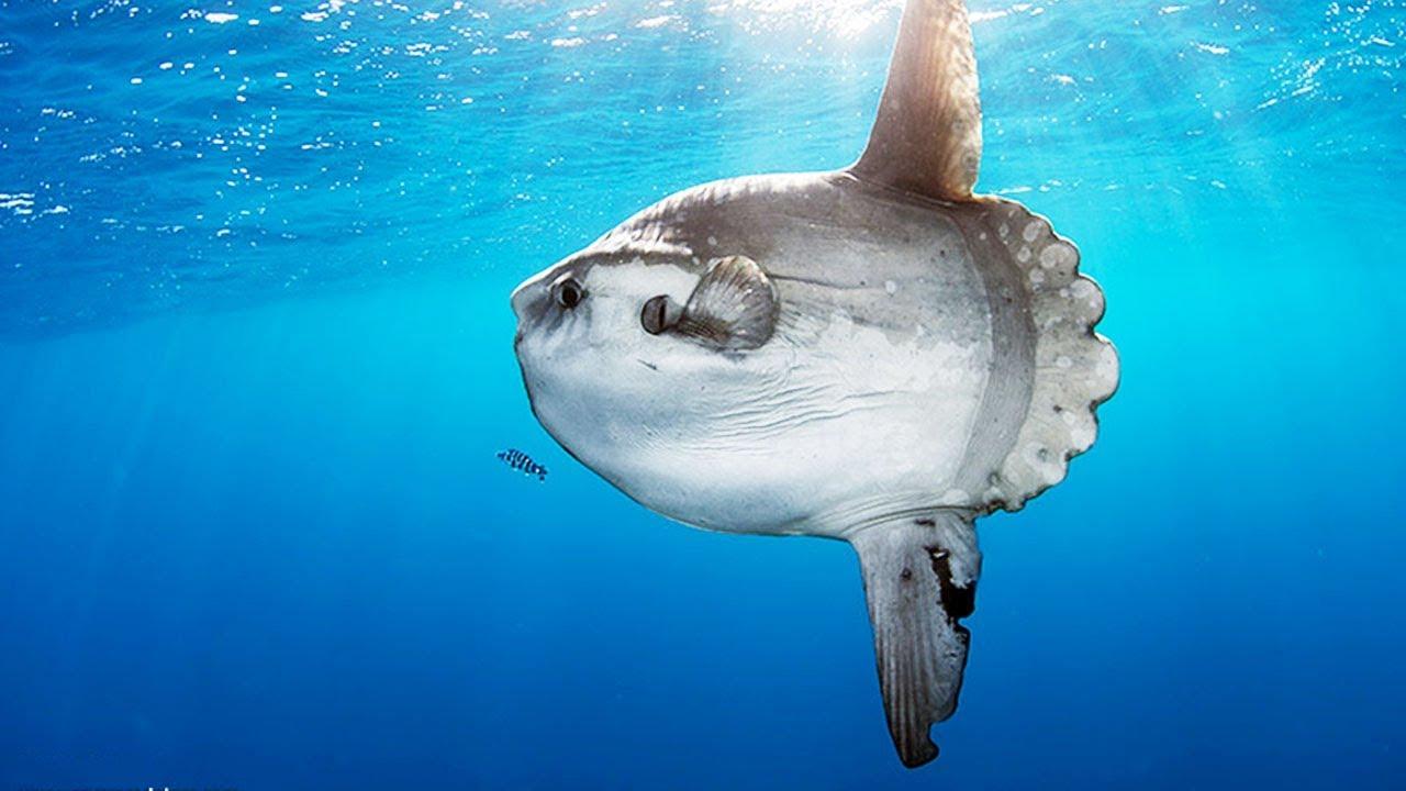 Weird Looking Fish 11