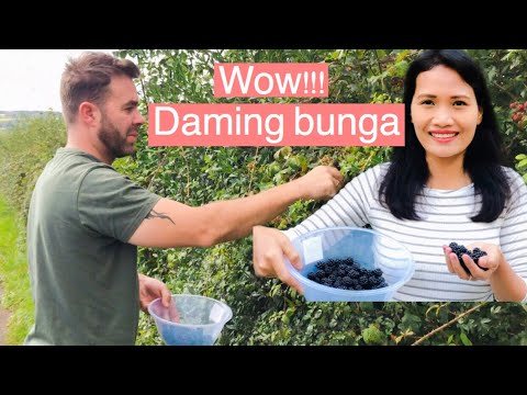 filipina-life-in-uk-|-fresh-from-the-farm/blackberries-libre-lang