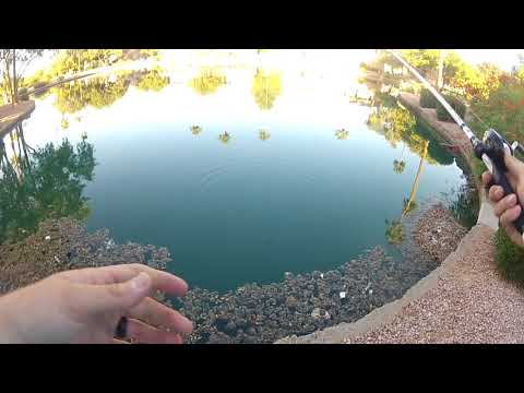 AZ Urban Bass Fishing - WE GOT KICKED OUT!!