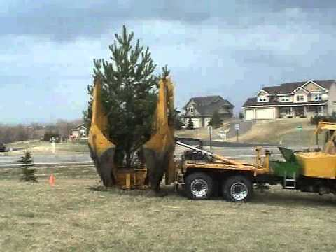Tree Transplanting and Tree Moving Services - Northland Tree