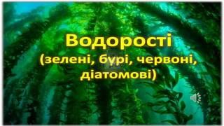 водорості  відеопрезентація 6 клас